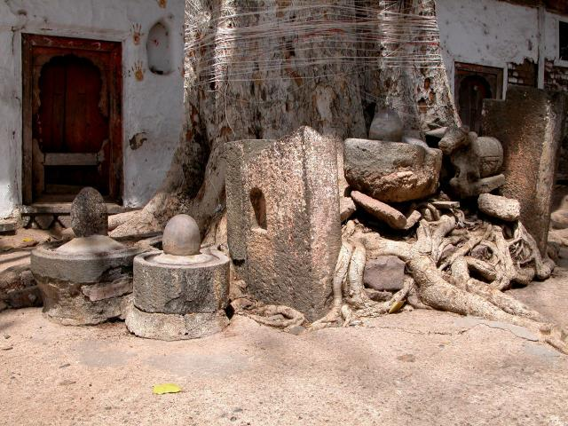 Ashvattha_tree_at_Maheshvara.jpg